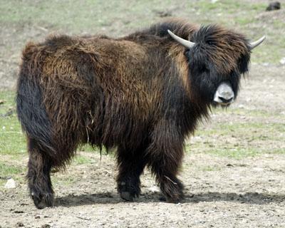Cmcrossroads go bimodal in your enterprise stop shaving the yak